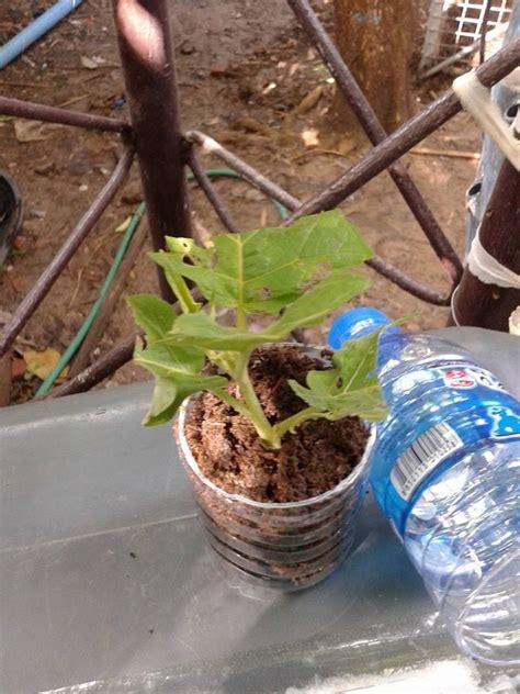 วิธีการปักชำต้นไม้ง่ายที่สุดในโลก สไตล์ ครูชาตรี หลายๆ ...