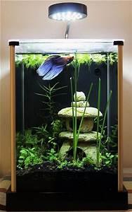 15 Stunning Aquarium Design Ideas For Indoor Decorations