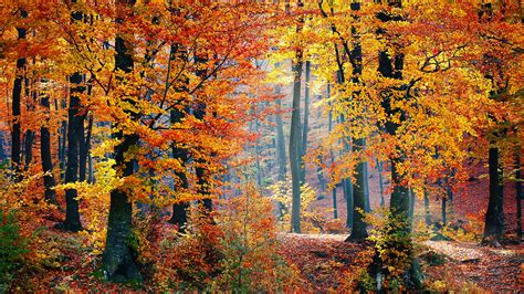 Download This Free Autumn Woods Tablet Wallpaper In HD Or ...