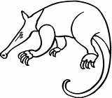 Anteater Coloring Pages Drawing Giant Aardvark Anteaters Printable Colouring Cliparts Clipart Adults Supercoloring Getcoloringpages Looking Food Getdrawings Print Clip Clipartbest sketch template