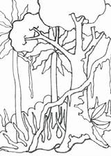 Rainforest Forest Drawing Coloring Trees Tree Pages Getdrawings Tropical Rain Related sketch template
