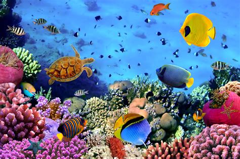 Underwater Wallpapers Hd Pixelstalknet