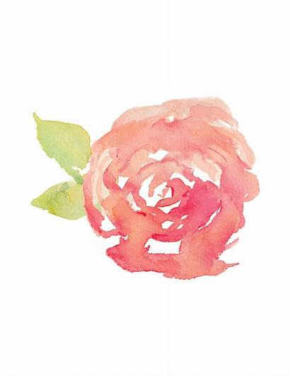 Watercolor Rose Svg Cut Getdrawings Paintingvalley Stockshop