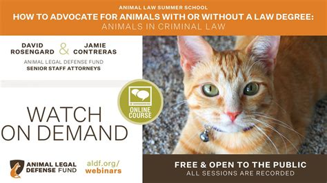 How to Advocate for Animals With or Without a Law Degree ...