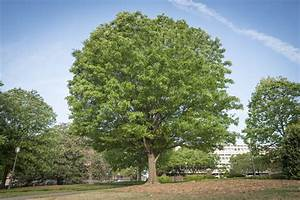 Earth Day is a great day to appreciate trees   Clemson ...