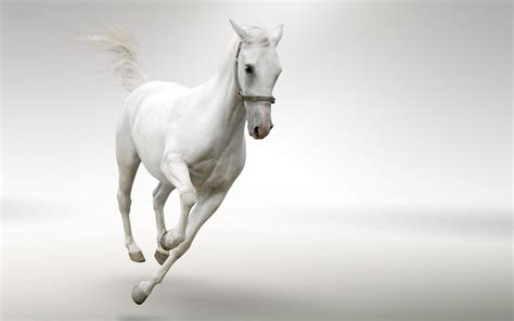 horse running fast wallpapers horses hd background animal desktop