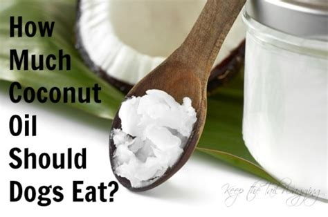 How Much Coconut Oil Should Dogs Eat?  Keep The Tail Wagging