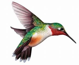 hummingbirds clipart - Google Search | needleart ...
