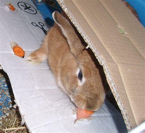 Kaninchen Spielzeug Selber Bauen