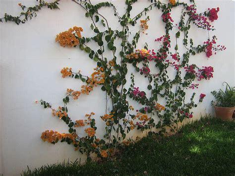 diy bedroom decorating ideas on a budget garden climbing plants 10 beautiful garden ideas