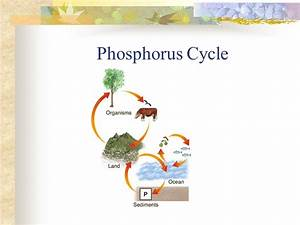 [ Diagram Of A Nitrogen Cycle ] - Best Free Home Design ...