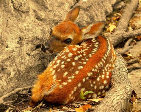Download Nature Animals Wallpaper 1280x1024  Wallpoper #263111