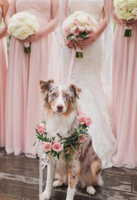 precious wedding photo ideas   dogs page