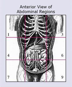 Anatomical Terms  U0026 Meaning  Anatomy Regions  Planes  Areas