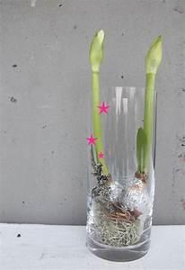 Amaryllis Im Glas : die besten 25 orchideen im glas ideen auf pinterest topf orchidee mitteldekoration orchideen ~ Eleganceandgraceweddings.com Haus und Dekorationen