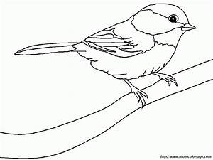 Black Capped Chickadee Colouring Pages Page 2 Coloring