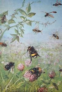 183 best images about Nature: Bees on Pinterest | Bumble ...