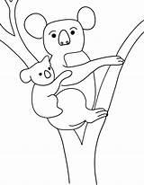 Koala Coloring Pages Colouring Printable Animal Template Penguin Cliparts Bear Emperor Kolala Animalplace Templates sketch template