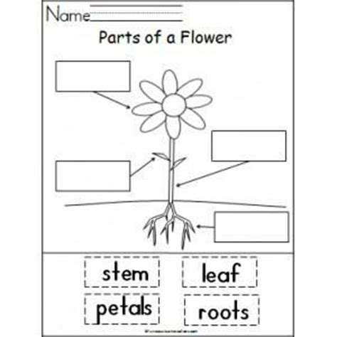 learning about the parts of a plant planting 729 | 252b9982a20a2d9d4c6d823b10ad52c0 kindergarten lesson plans science lesson plans