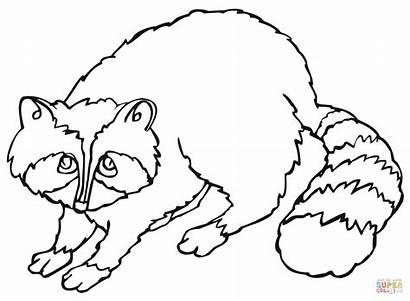 Raccoon Coloring Pages Drawing Printable Sheet Raccoons