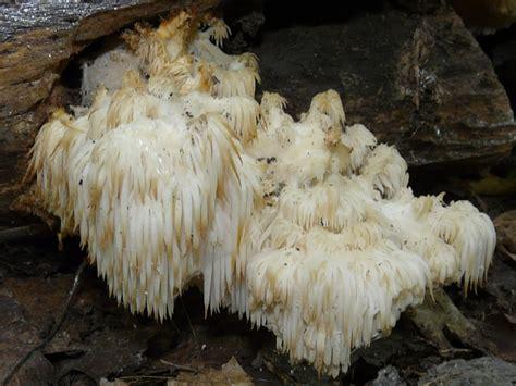 toronto wildlife tooth coral fungi