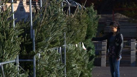 christmas tree sale orchard hardware tree 101 your guide to finding the right evergreen kctv5 news