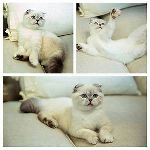 Pin Taylor Swifts Cat Tumblr on Pinterest