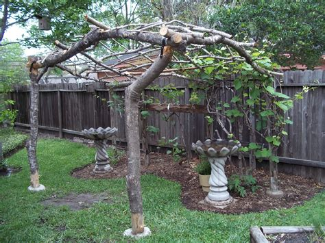 Grape Vine Arbor Made With Reclaimed Limbs From The Front