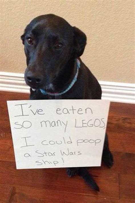 funny dogs  signs admitting  bad