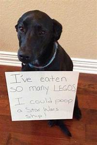 Funny Dogs With Signs Admitting The Bad Things They Did