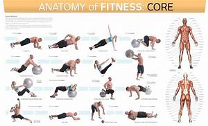 Anatomy Of Fitness  Core  The Trainer U0026 39 S Inside Guide To