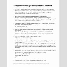 13 Best Images Of Ecological Pyramids Worksheet Answer Key  Photosynthesis Biology Answer Key