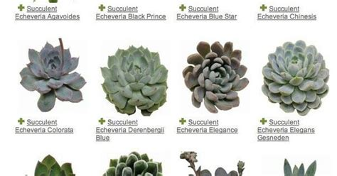 types of succulents different types of succulents one day pinterest different types of types of succulents