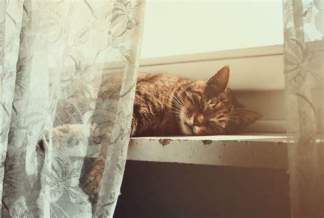 high quality wallpaper  cat desktop wallpaper  cat