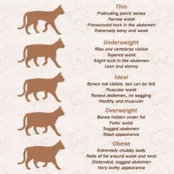 healthy weight for a cat what should be the ideal weight of your pet cat