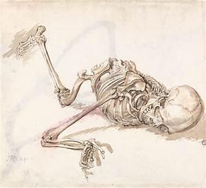 Figure Structure : Skeleton