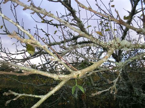 Prune Standard Fruit Trees In Winter Read Our Blog On How