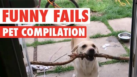 funny dogs  cats silly pet fails compilation