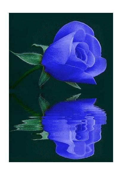 Water Gifs Animated Rosas Colorful Yahoo Reflecting