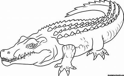 Crocodile Coloring Animal Dangerous Saltwater Drawingboardweekly Different