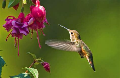 Hummingbird Desktop Background – WeNeedFun