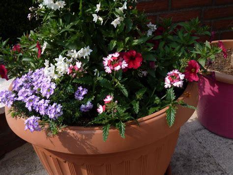 Welche Blumen Vertragen Viel Sonne by Blumen Die Viel Sonne Vertragen Sonniger Balkon Welche