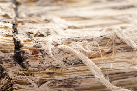 asbestos removal   home