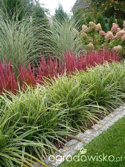 border grasses for landscaping 17 best images about garden border ideas on pinterest hedges garden borders and boxwood hedge