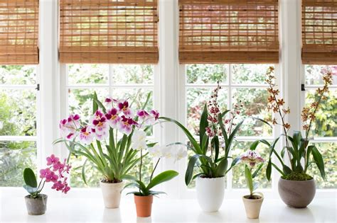 Indoor Windowsill Flowers best indoor plants 6 flowering orchids to grow gardenista