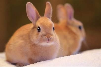 Rabbit Animal Wallpapers Background 1920