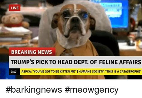 Aspca Meme Aspca Memes Of 2017 On Sizzle My