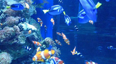 aquarium pacific aquarium of the pacific aquarium of the pacific 2017 fish tank maintenance