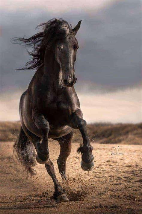 pferde die schoensten tiere