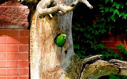 Birds Parrots Trees Nature Wallpapers Updated Views